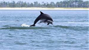 Un delfín da las gracias así cuando salvan a su bebé, increíbles imágenes