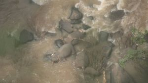 6 elefantes mueren tratando de salvarse en una cascada en Tailandia