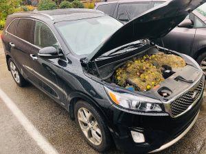 La invasión de las ardillas: Conductor encuentra 200 nueces en su motor