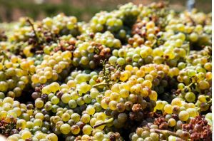 ¡Mantén a raya los triglicéridos! Súper poderosa bebida natural de uva verde