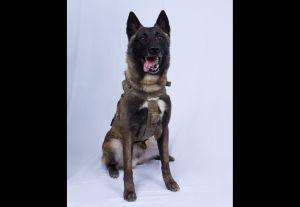 Trump revela imagen del perro que ayudó en la operación contra líder de ISIS
