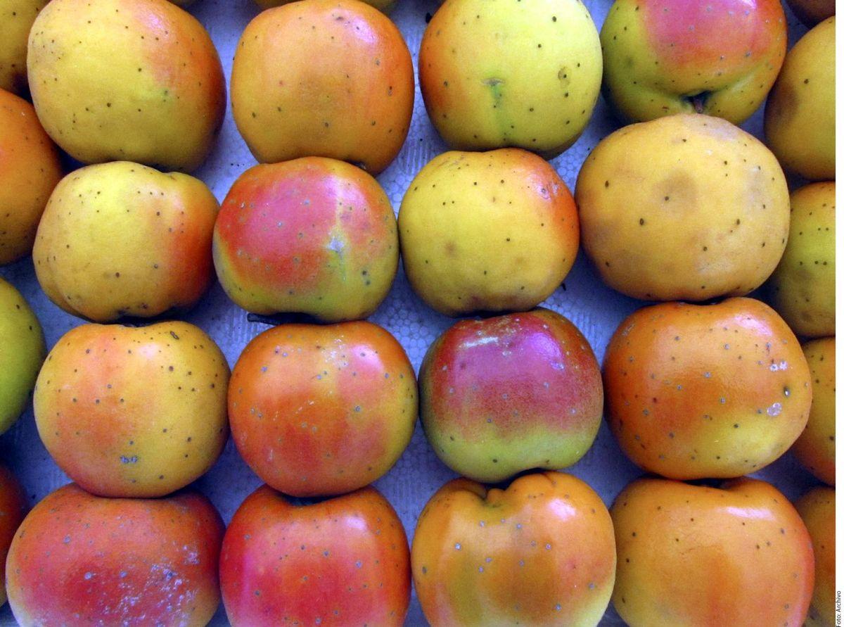 Los nísperos son una fruta con alto contenido en fibra, fomentan la buena digestión y combaten el estreñimiento.