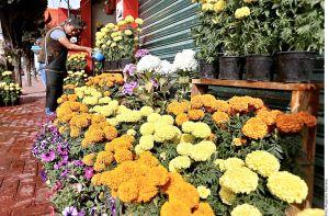 La flor de cempasúchil: delicioso remedio contra hongos y bacterias