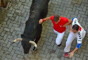 ¡Sustazo! Toro invade cancha y embiste a jugadores en Argentina
