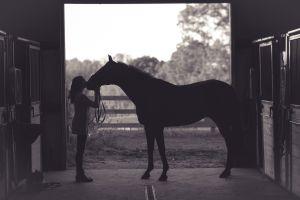 Su compañero caballo murió, ¡y se lo comió!