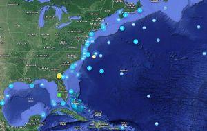 Reportan tiburón gigante de una tonelada en la costa este de EEUU y Canadá