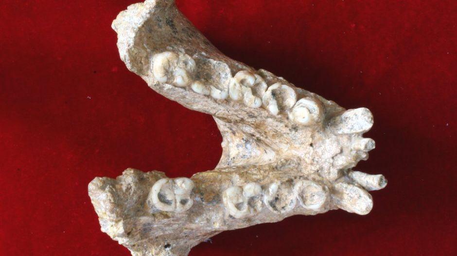 Gigantopiteco: los secretos del mayor simio que jamás haya existido
