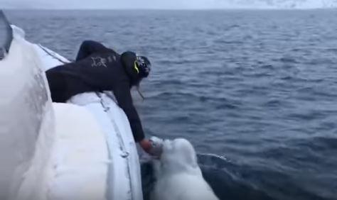 """Sorprende beluga por """"jugar rugby"""" con marinero"""