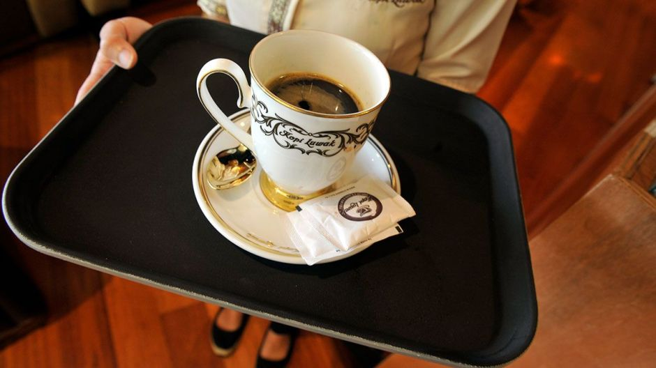 Kopi Luwak: el café más caro del mundo que sacan del excremento de un animal