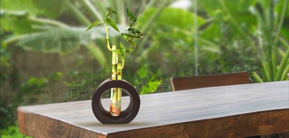 5 bambús de la suerte para mejorar el flujo de energías en tu hogar