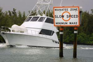 Los navegantes de Florida mataron a un número récord de manatíes en 2019