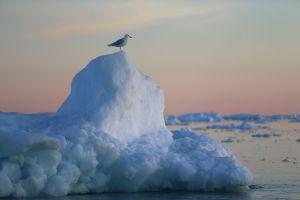 """La pérdida de hielo de Groenlandia """"podría dejar a 400 millones de personas sin hogar a finales de siglo"""""""