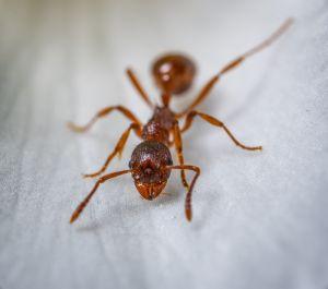 Los métodos más naturales y simples para deshacerte de las hormigas en tu casa