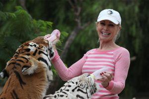 Ecologista es atacada por los tigres que crió en California