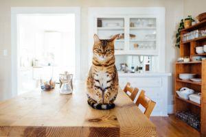 Cómo lograr que tu casa siempre huela bien, aún teniendo uno o varios gatos
