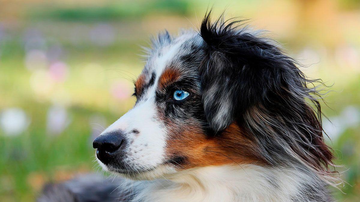 Mujer de San Francisco da $7,000 a quien le regrese a su perro robado (y promete no hacer preguntas)
