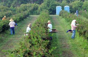 Buscan detener norma que permitirá aplicar pesticidas en presencia de trabajadores agrícolas