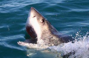 """Pescador atrapó un tiburón de 10 pies """"por casualidad"""" en Nueva Jersey"""