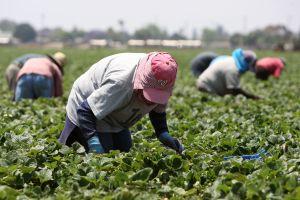 Famosos se unen para ayudar a los otros héroes de esta pandemia: los trabajadores agrícolas