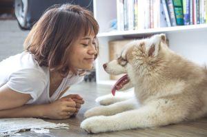 ¿10 alimentos que puedes compartir con tu perro?