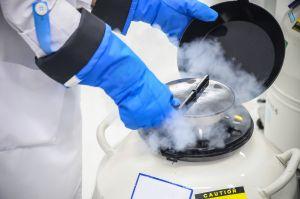 ¿La criopreservación de óvulos sirve para postergar el embarazo?