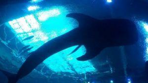 Pescador escapa de las fauces de un tiburón, pero muere en los brazos de su hermano