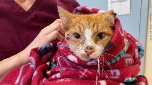 Gatito sobrevive una semana con una flecha en la cabeza y conmueve al mundo