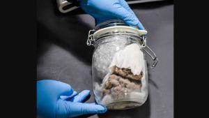 Descubren cerebro humano en un envío de paquetería