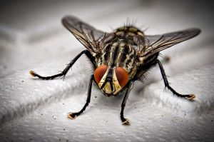 Niño se come dos moscas durante entrevista en vivo para la televisión