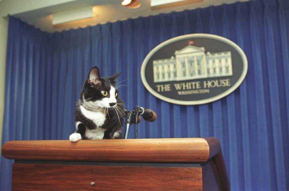 Día del Gato: fechas y razones por las que se celebra a los felinos
