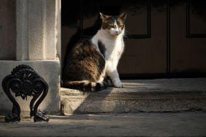 Una anciana de Florida, amante de los animales, tiene más de 60 gatos en su casa: las autoridades quieren quitárselos