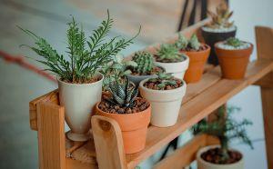 5 plantas que atraerán la energía positiva a tu hogar y trabajo