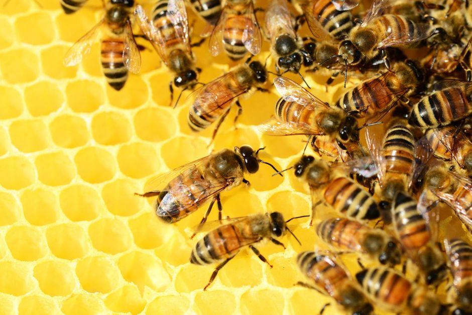 Enjambre de abejas mata a tres perros en Arizona