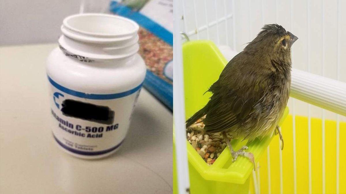 Un hombre aterrizó en Miami con un bote de plástico: en el interior llevaba un pájaro muerto
