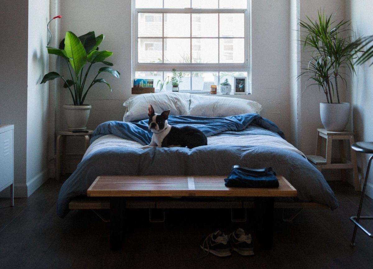 Purifica el aire en el interior de tu hogar con estas 5 hermosas plantas de Ikea por menos de $35