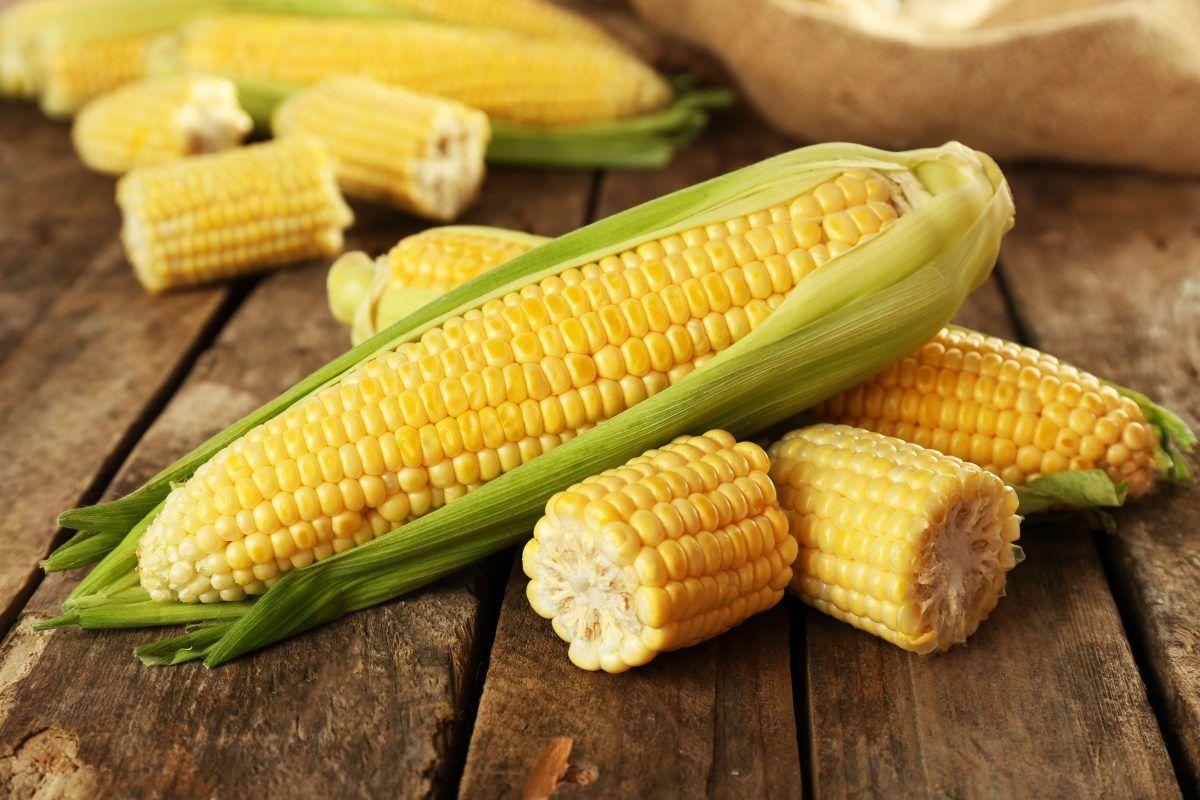 El consumo de maíz está altamente recomendado para personas que desean bajar de peso.
