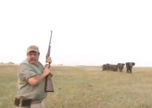 Asesinan a extraños ejemplares de jirafas blancas