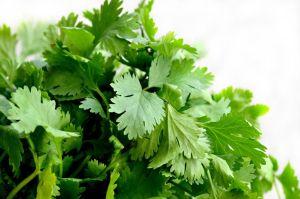 Lo que una taza de té de cilantro hará por tu salud