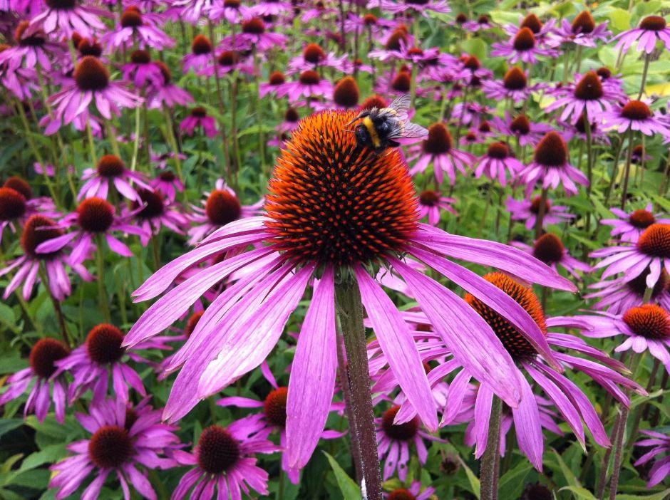 4 maravillosas plantas medicinales mexicanas para curar todo mal