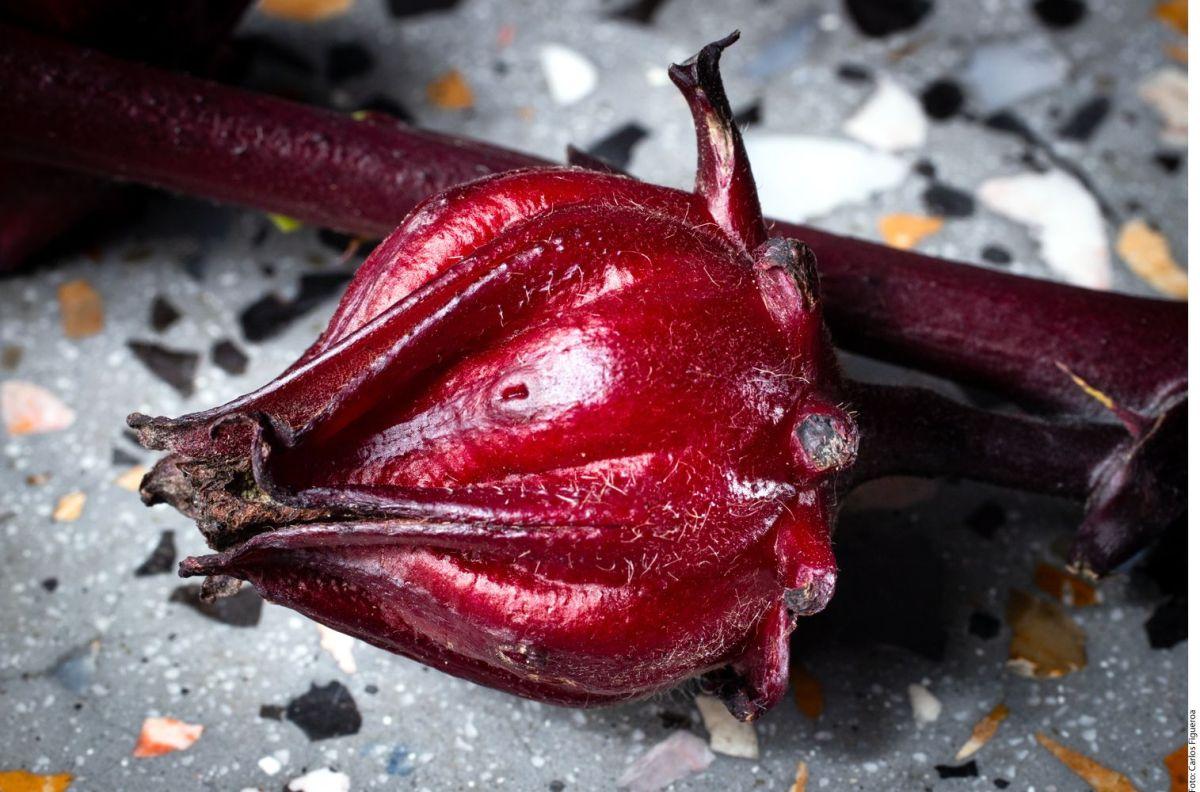 Los inigualables beneficios medicinales de la flor de jamaica