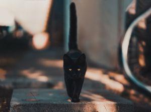 Ailurofobia, el trastorno que padece Leticia Calderón por miedo a gatos