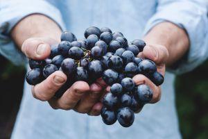 Come más uvas: Conoce sus maravillosos beneficios medicinales