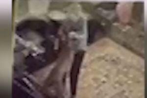 VIDEO: Paciente de 92 años con Alzheimer es atacada por un perro callejero que dejaron estar en asilo