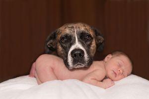 Un perro se convirtió en la mejor niñera de unos bebés
