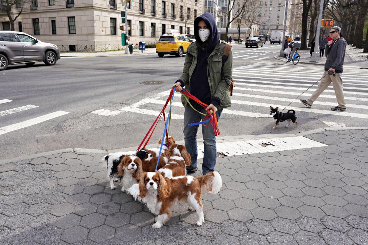 Mascotas en Nueva York.