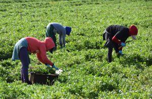 Población de Colorado, Nebraska y Ohio a favor de llegada de inmigrantes