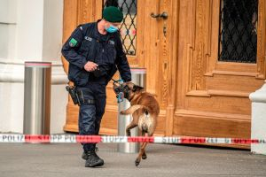 Entrenan a perros para detectar y rastrear casos de coronavirus