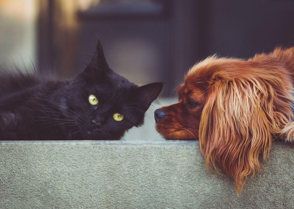 Descubre cómo proteger a tu mascota del mal de ojo
