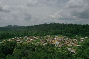 Deforestación y expansión de ciudades expone a los humanos a pandemias como la del COVID-19