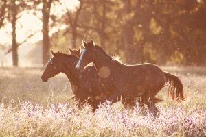 Menor de 16 años se suicida luego de que su mamá le pidiera que galopara más lento su caballo